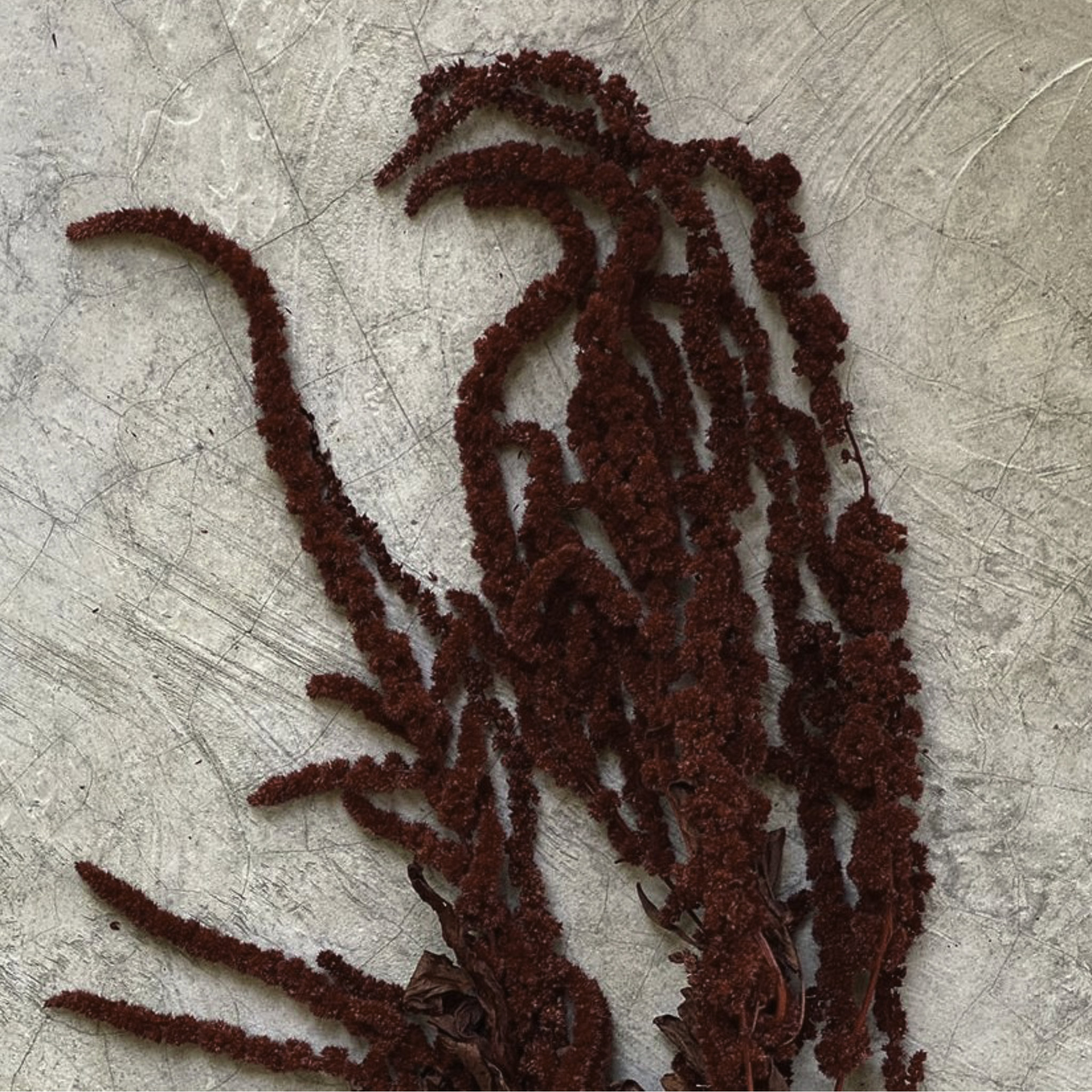 Amaranthus Dried Bunch- Red